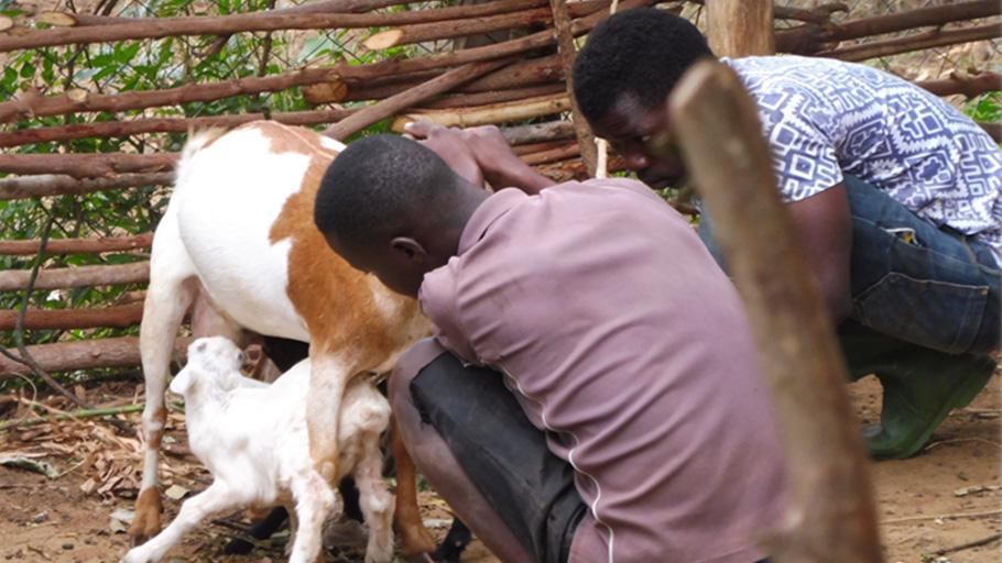 Les jeunes s'initient à l'élevage et à prendre soin des bêtes